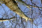Stromy shora - ideální místo pro načerpání nové energie na další překlady